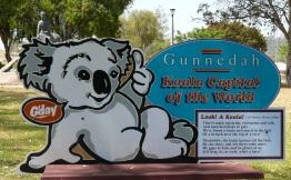 gunnedah_koala